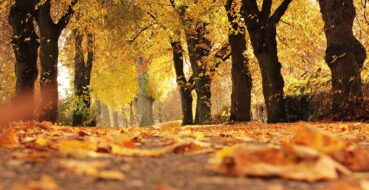As the Leaves Turn – Fall at FOAJ